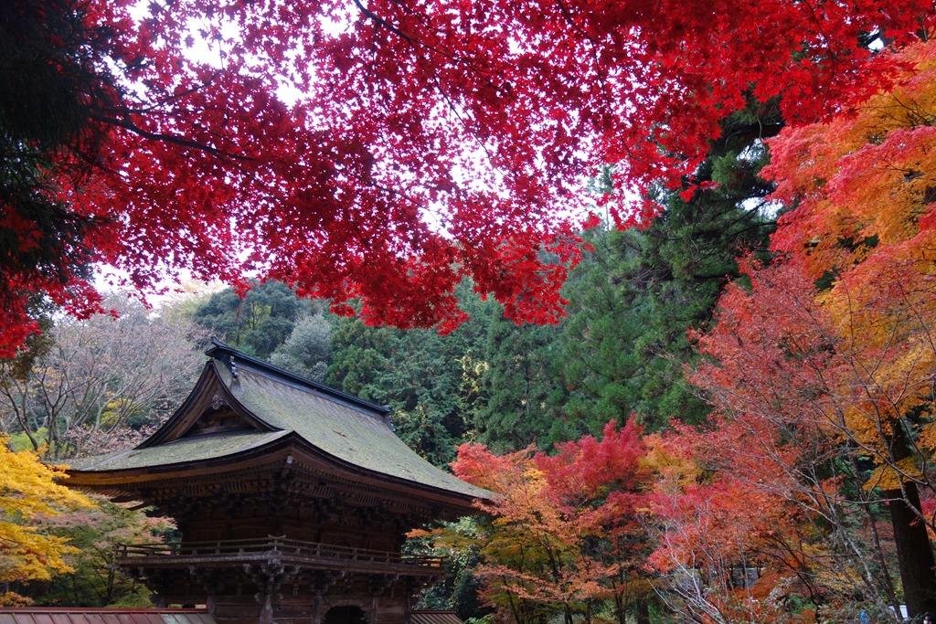 大矢田神社の紅葉