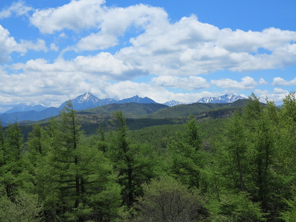 新緑の入笠山