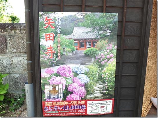 奈良・京都紫陽花2017 002