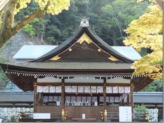 牡丹 関西 2017 069