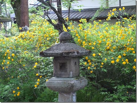 牡丹 関西 2017 081