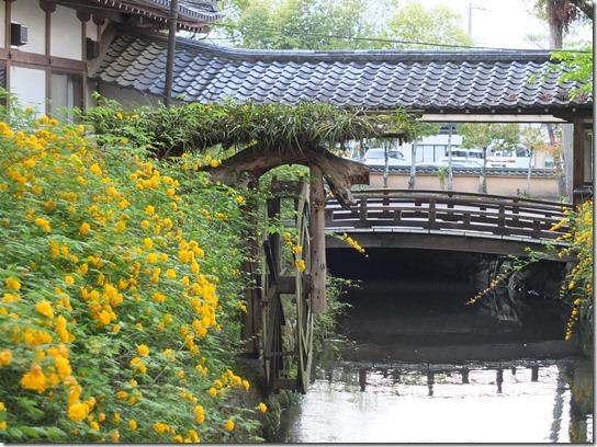 牡丹 関西 2017 082