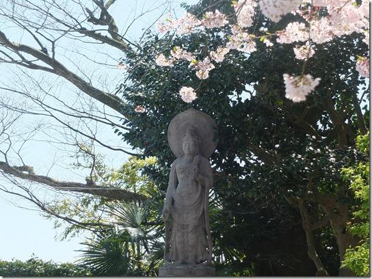 鎌倉 牡丹 桜 130