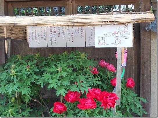 牡丹 関西 2017 130