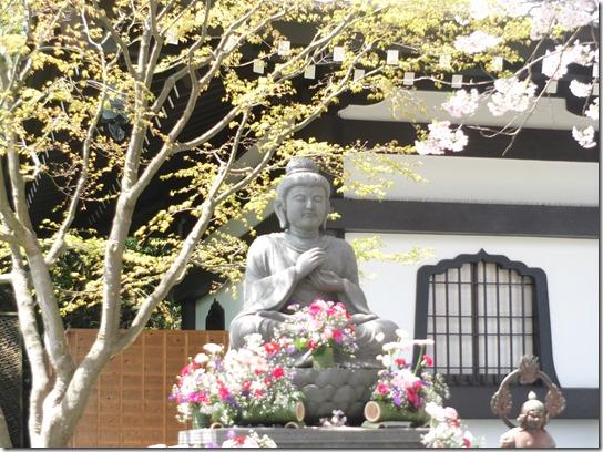 鎌倉 牡丹 桜 134