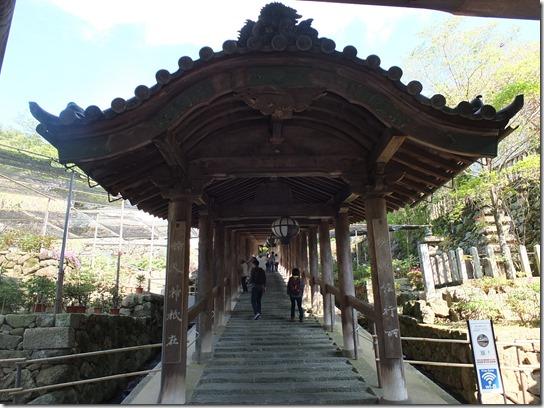 牡丹 関西 2017 136