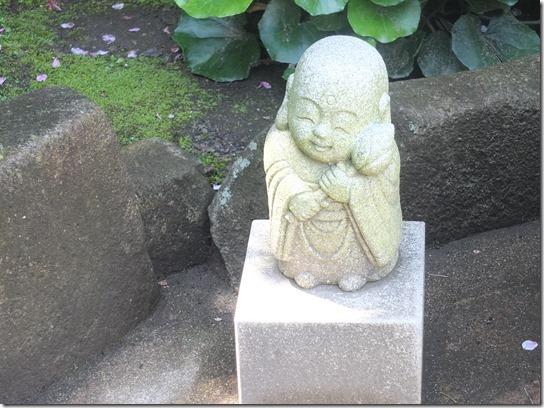 鎌倉 牡丹 桜 169
