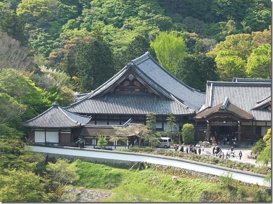 牡丹 関西 2017 177