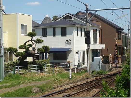鎌倉 牡丹 桜 184