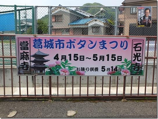 牡丹 関西 2017 207