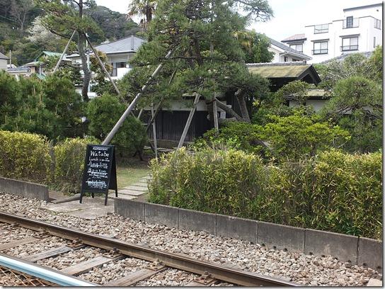 鎌倉 牡丹 桜 231