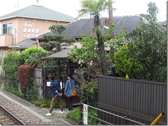 鎌倉 牡丹 桜 245