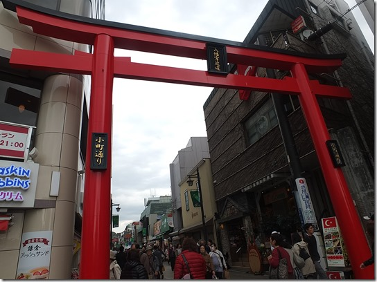 鎌倉 牡丹 桜 248