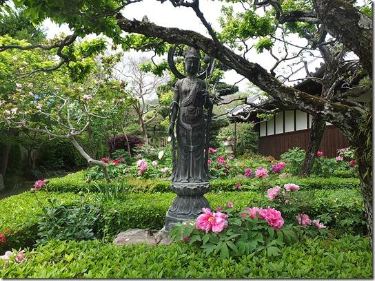 牡丹 関西 2017 277