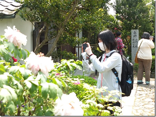牡丹 関西 2017 282