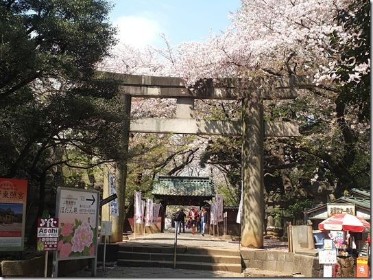 鎌倉 牡丹 桜 442