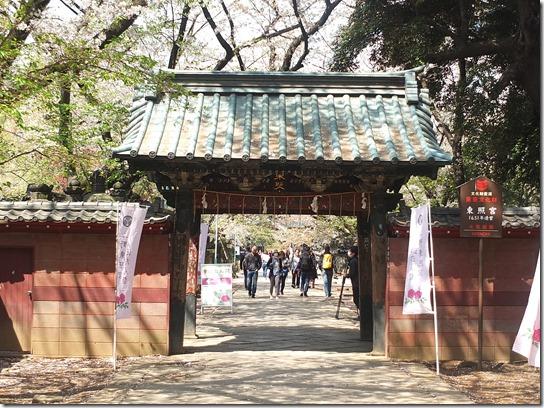 鎌倉 牡丹 桜 447