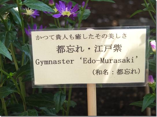 鎌倉 牡丹 桜 500