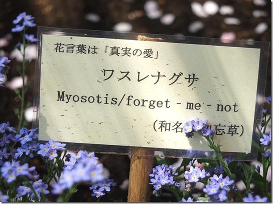 鎌倉 牡丹 桜 504