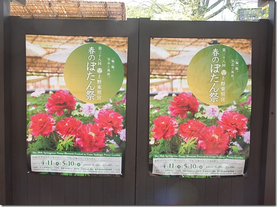 鎌倉 牡丹 桜 585