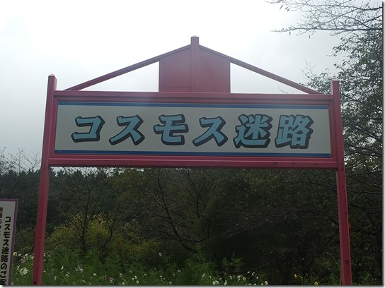 コスモス奈良 002
