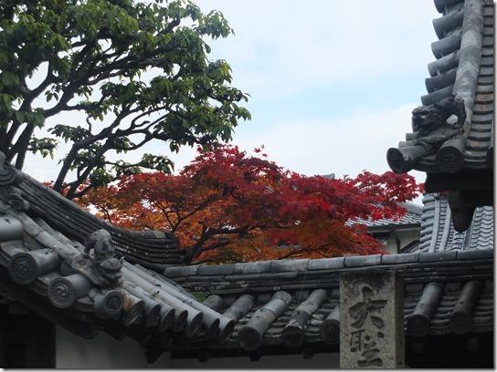 2016京都紅葉 002