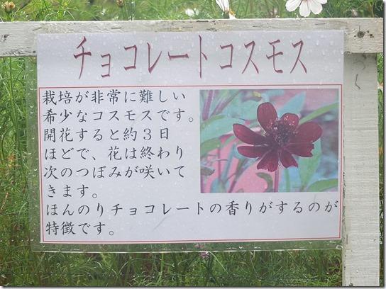 コスモス奈良 003