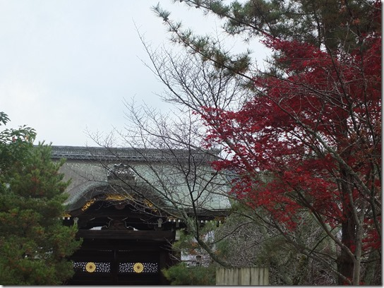 2016京都紅葉 006