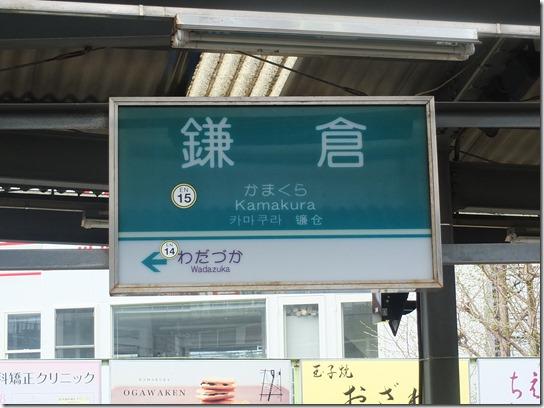 鎌倉 牡丹 桜 011
