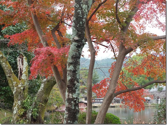 2016京都紅葉 012