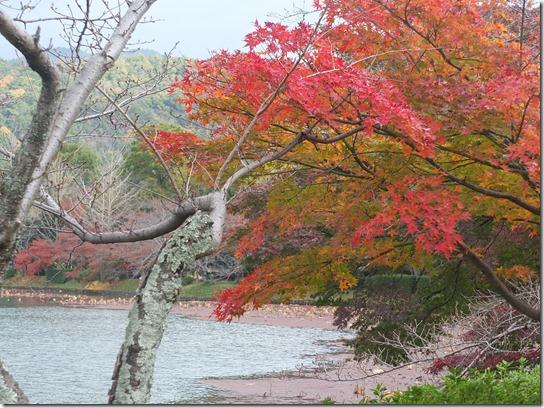 2016京都紅葉 016