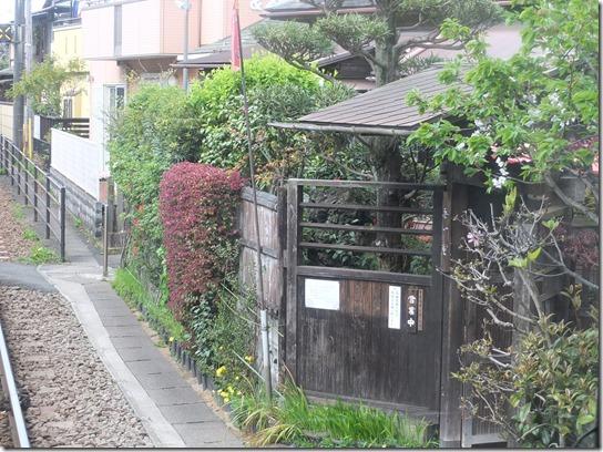 鎌倉 牡丹 桜 017