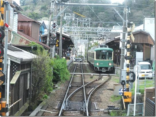 鎌倉 牡丹 桜 020