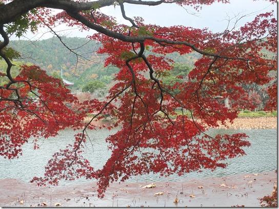 2016京都紅葉 021