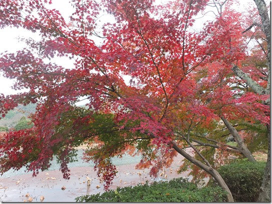 2016京都紅葉 022