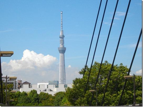 コスモス 東京 025