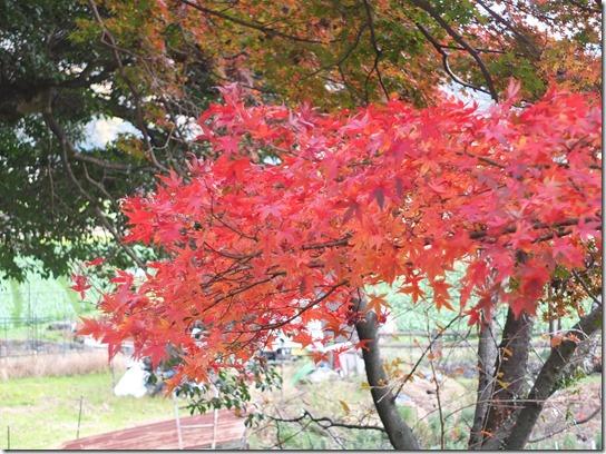 2016京都紅葉 026