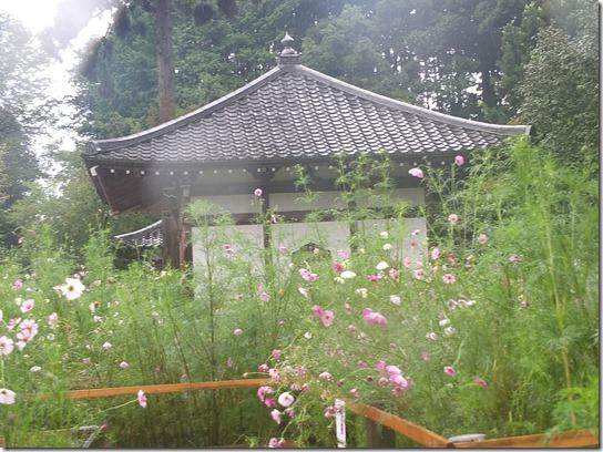 コスモス奈良 028