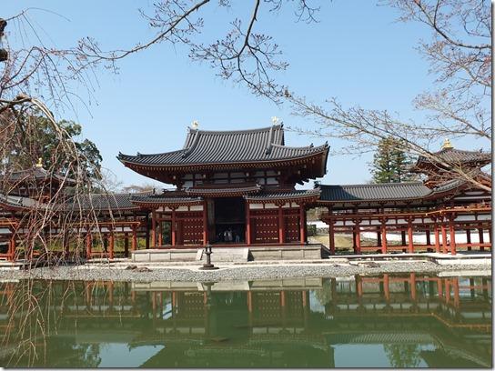 2017京都桜 033