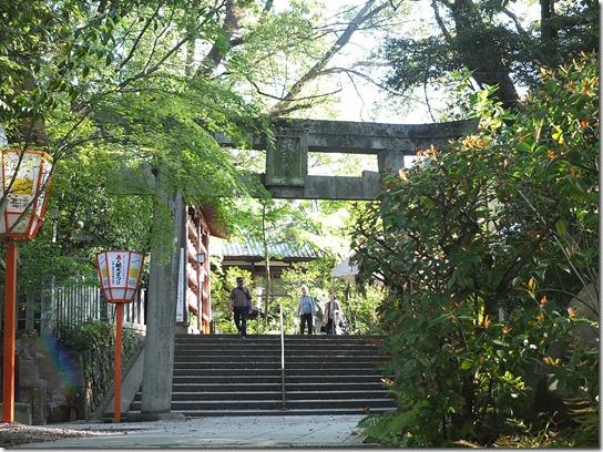 牡丹 関西 2017 035