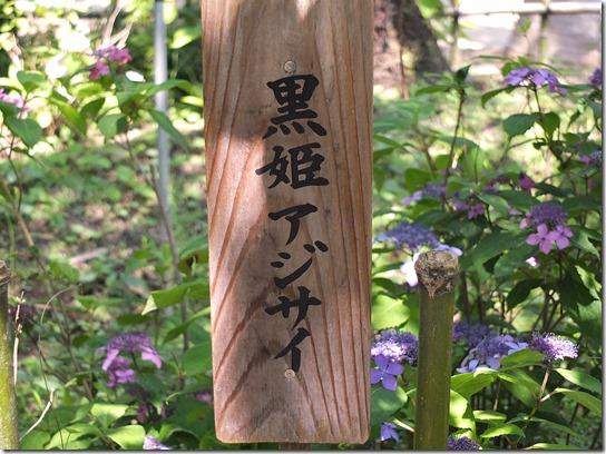 奈良・京都紫陽花2017 041