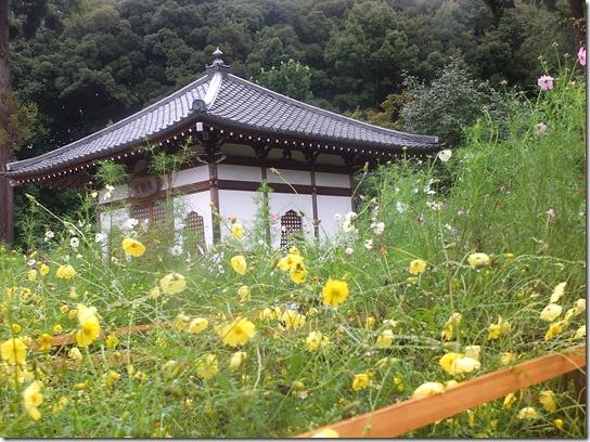コスモス奈良 043