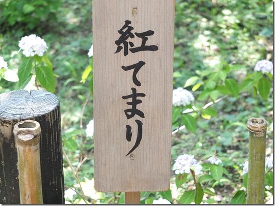 奈良・京都紫陽花2017 045