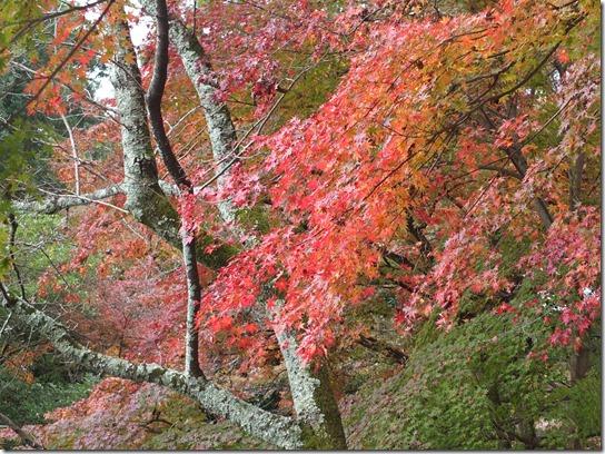 2016京都紅葉 049