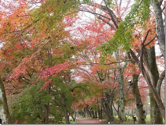2016京都紅葉 050