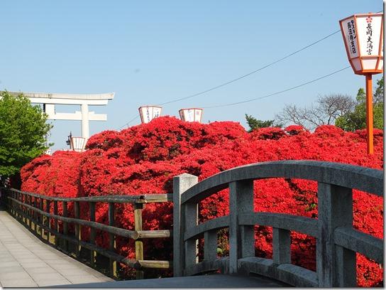 牡丹 関西 2017 051