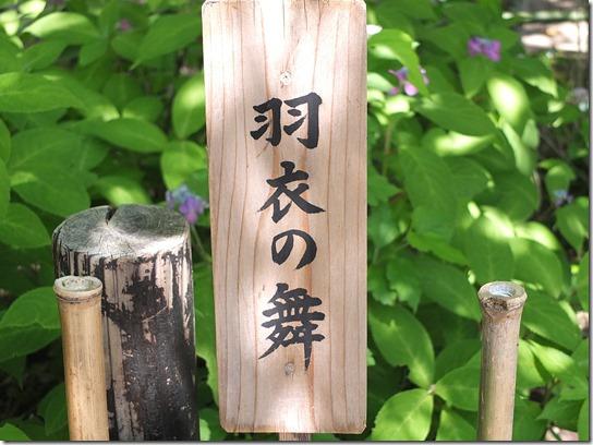 奈良・京都紫陽花2017 051