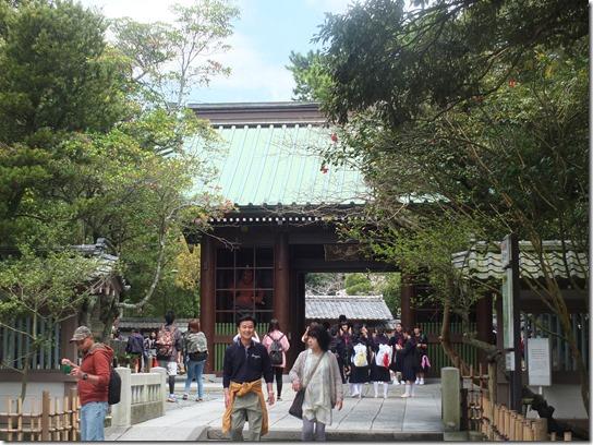 鎌倉 牡丹 桜 052
