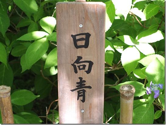 奈良・京都紫陽花2017 053