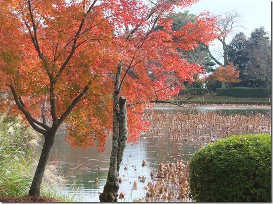 2016京都紅葉 056